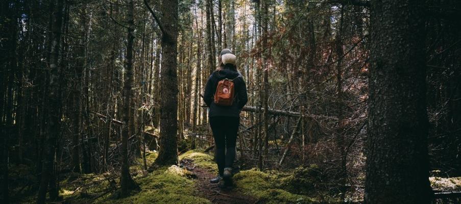 Sentier pédestre Lac Caribou crédit@Phil Têtu